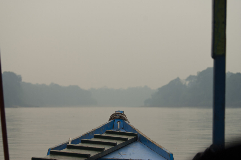 Amazon Jungle Tambopata